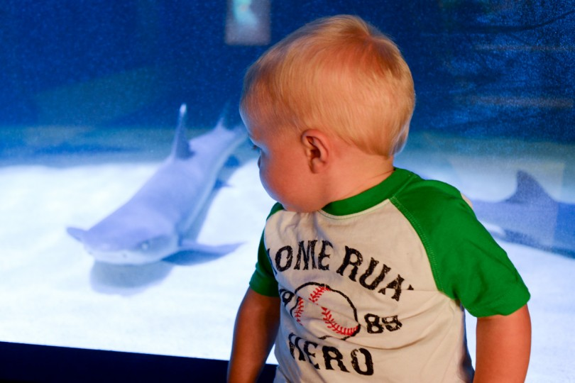 He had to keep his eye on the sharks!