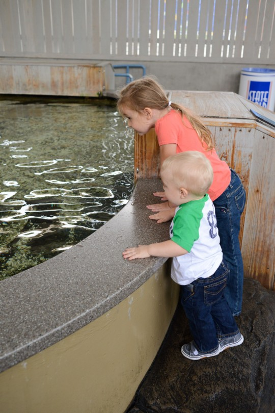 Checking out the sting rays at the touch pool!